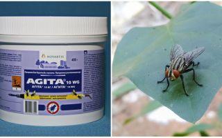 L'uso di Agita dalle mosche