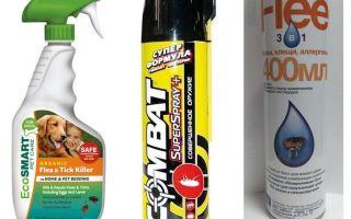 Spray per le pulci per l'appartamento