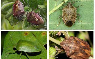 Bug del giardino