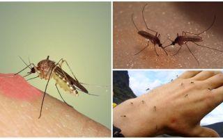 Perché le zanzare in natura