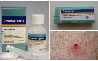Antibiotici dopo un morso di zecca