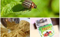 Senape e aceto contro lo scarafaggio della patata del Colorado: proporzioni e recensioni