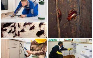 Combattere gli scarafaggi in un appartamento a casa