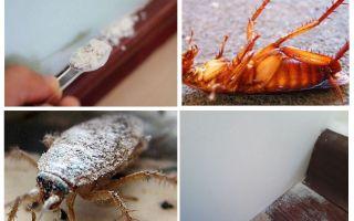 Panoramica delle polveri di scarafaggio