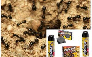 Ant Combat Rimedi