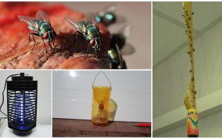 Come affrontare le mosche nel paese