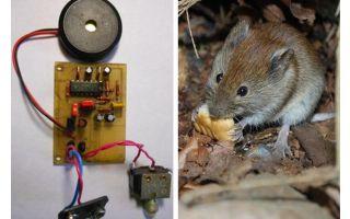Ratti e topi a repulsione ultrasonica con le proprie mani