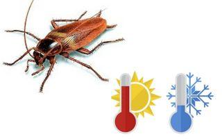 Di cosa hanno paura gli scarafaggi nell'appartamento?