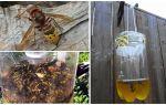 Trappole fatte in casa per calabroni e vespe