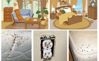 Efficace lotta con le cimici nell'appartamento