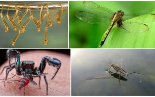 Chi mangia le zanzare