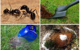Come sbarazzarsi di formiche nei rimedi popolari giardino