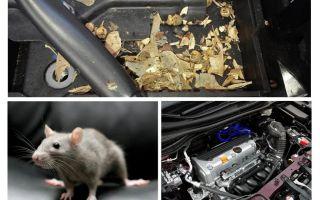 Come far uscire i topi dalla macchina