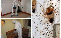 Sterminio di scarafaggi nell'appartamento