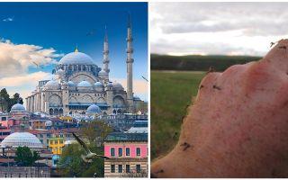 Ci sono zanzare in Turchia