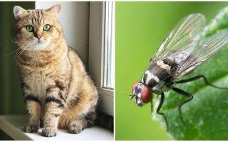 Cosa fare se un gatto o un gatto mangiano una mosca