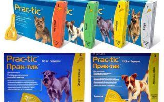 Gocce Pratiche da pulci e zecche per cani