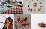Come sbarazzarsi in modo permanente degli scarafaggi nell'ostello