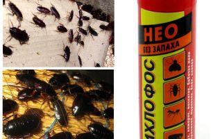 Il diclorvos degli scarafaggi aiuta - come avvelenare