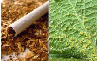 Tabacco contro gli afidi