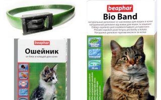 Collare Beafar dalle pulci per cani e gatti