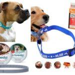 Collare antipulci per cani