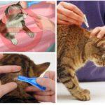 Regole di trattamento degli animali