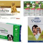 Compresse di pulci per cani