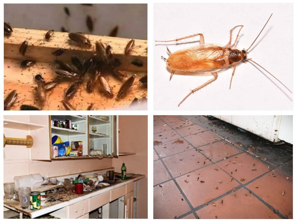 Piccoli Scarafaggi In Cucina piccoli scarafaggi in cucina - cosa fare