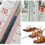 Freddo contro gli scarafaggi