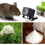 Metodi per trattare con i topi
