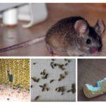 La presenza di topi nell'appartamento