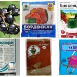 Prodotti chimici per combattere gli afidi