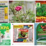 Prodotti chimici tossici per la protezione delle piante