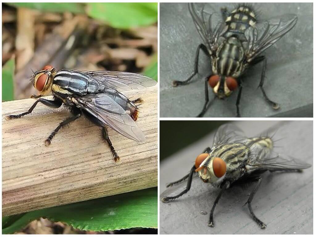 Gadfly umano della pelle