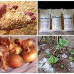 Modi per combattere con lo scarafaggio della patata del Colorado