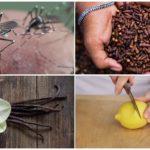 Metodi repellenti per insetti