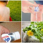 Ricette tradizionali per il trattamento delle punture di zanzara