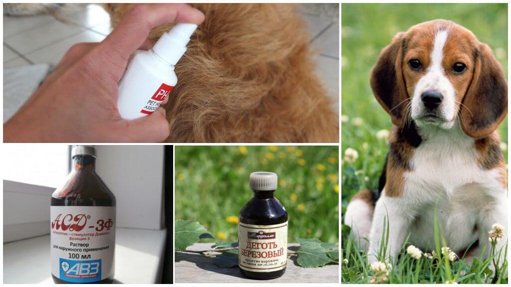 Repellente per zanzare per animali